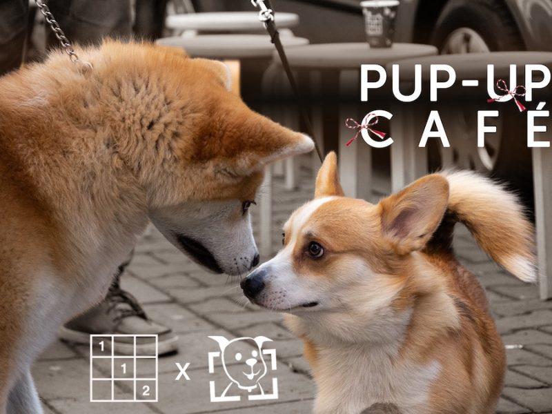 Pup-up Café