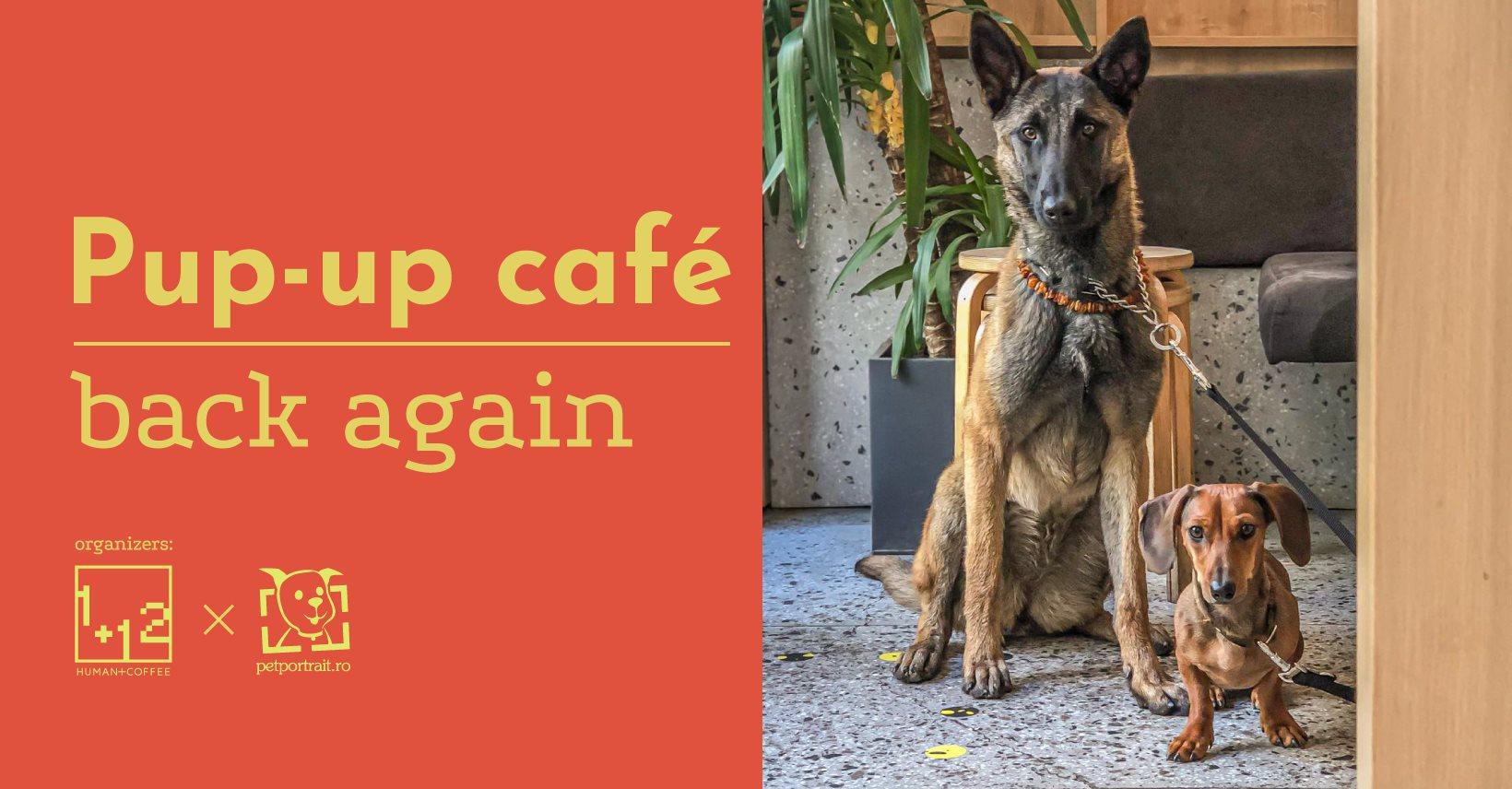 Pup-up café revine